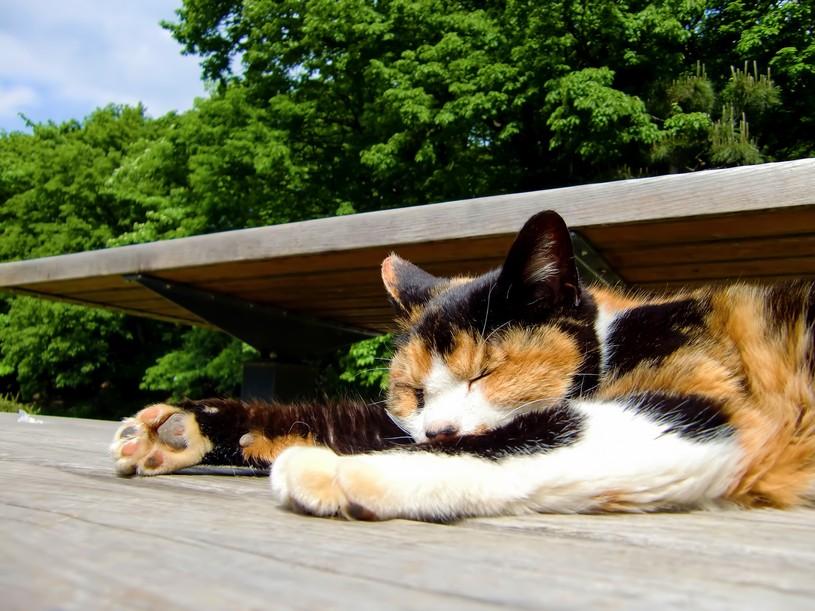日向ぼっこ猫