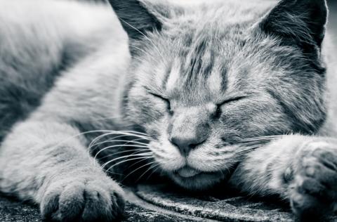 早寝早起きが生物学的に不可能な人もいるようだけれど、沢山寝ればなんとかなる